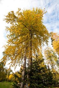 Trees-6347