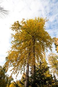 Trees-6349