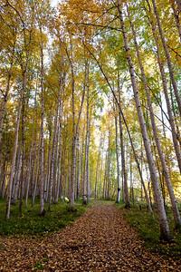 Trees2-6593