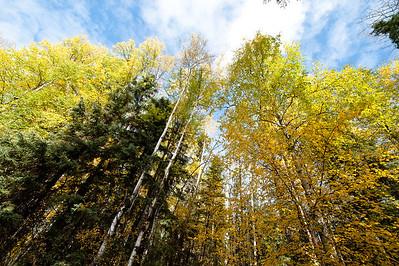 Trees-6417
