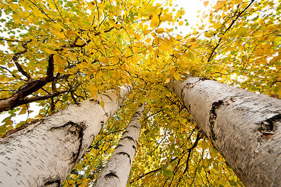 Trees-6338