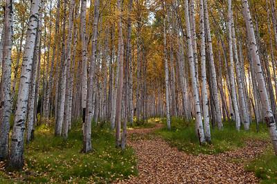Trees2-6611