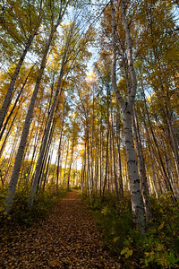 Trees-6766
