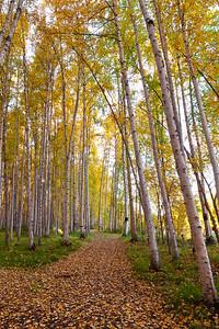 Trees2-6592