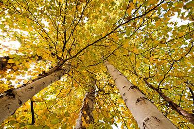 Trees-6337