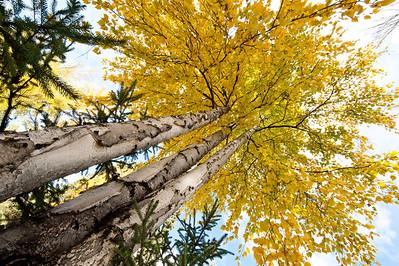 Trees-6443