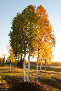 Trees-7121