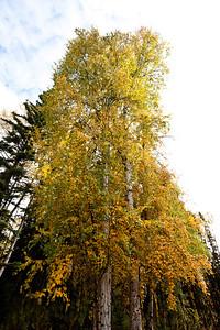 Trees-6340