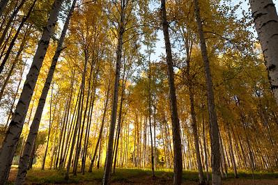 Trees-6777