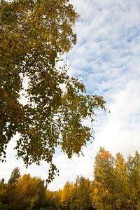 Trees-6376