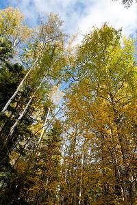 Trees-6418