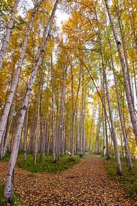 Trees-6592