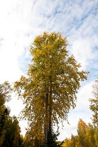 Trees-6345