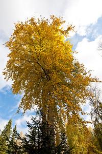Trees-6480