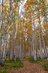 Trees-6611