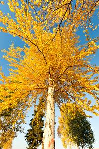 Trees-7141