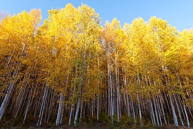 Trees-7026