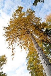 Trees-6402