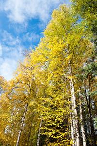 Trees-6413