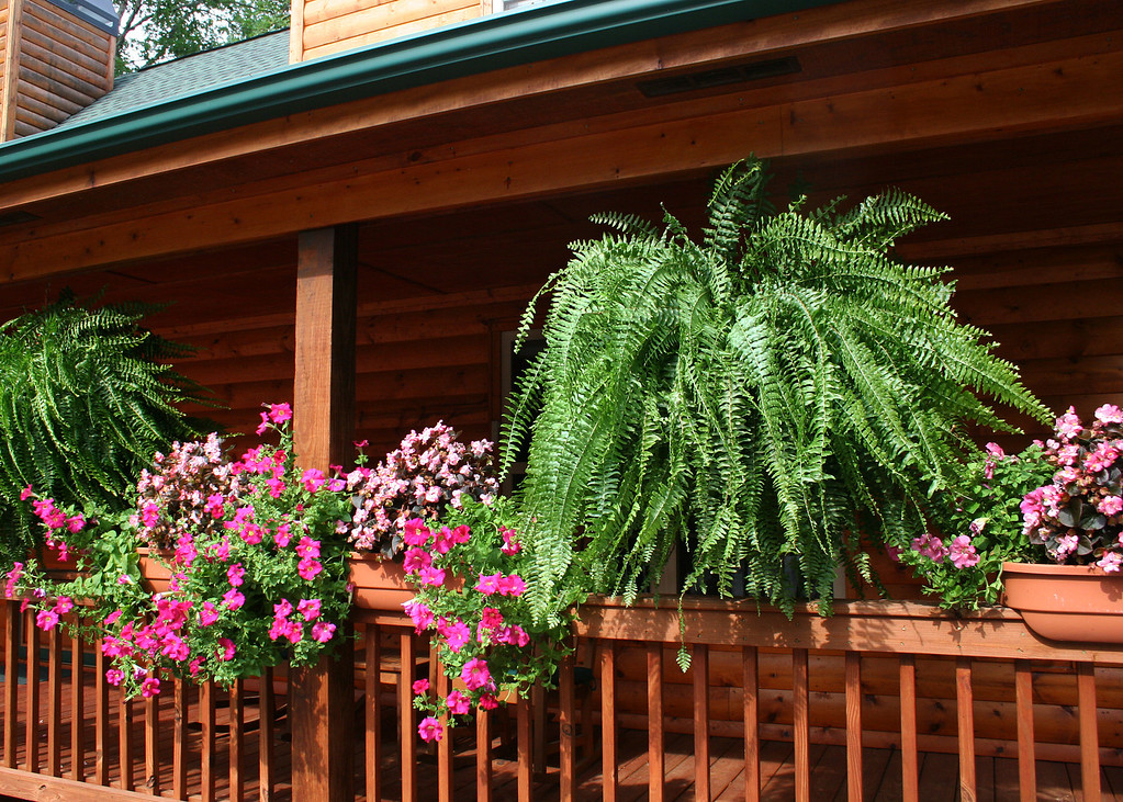 Ferns and flowers on front deck in July.