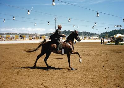 Del Mar National Horse Show 1985