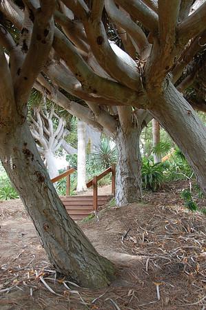 Botanic Garden 2010