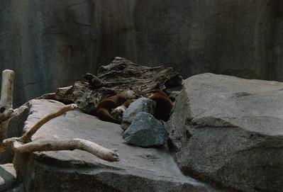 Zoo 1993