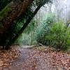 Walking  Into a Fairytale