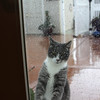 Can I Come In?