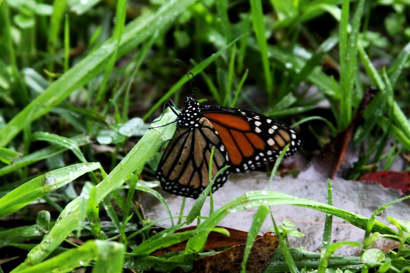 Butterflies: Self Propelled Flowers