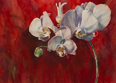 Orchids Avant Rouge