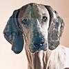 favorite hound 2