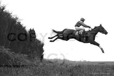 flying horse copy