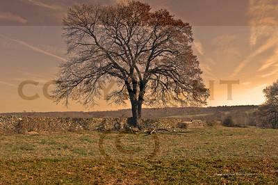 smitten farm wall & tree best copy