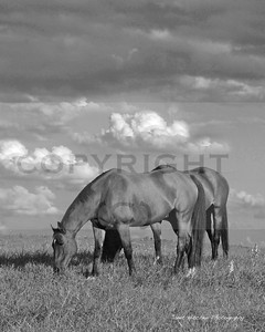 horses at chilly Bleake copy 3 copy