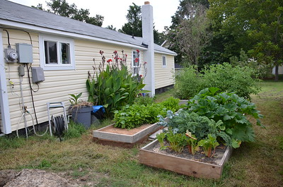 Raised garden beds behind my little house in Matthews, NC.  2013.