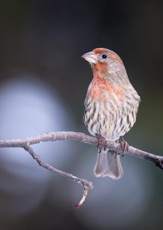 January Birds in Fergus
