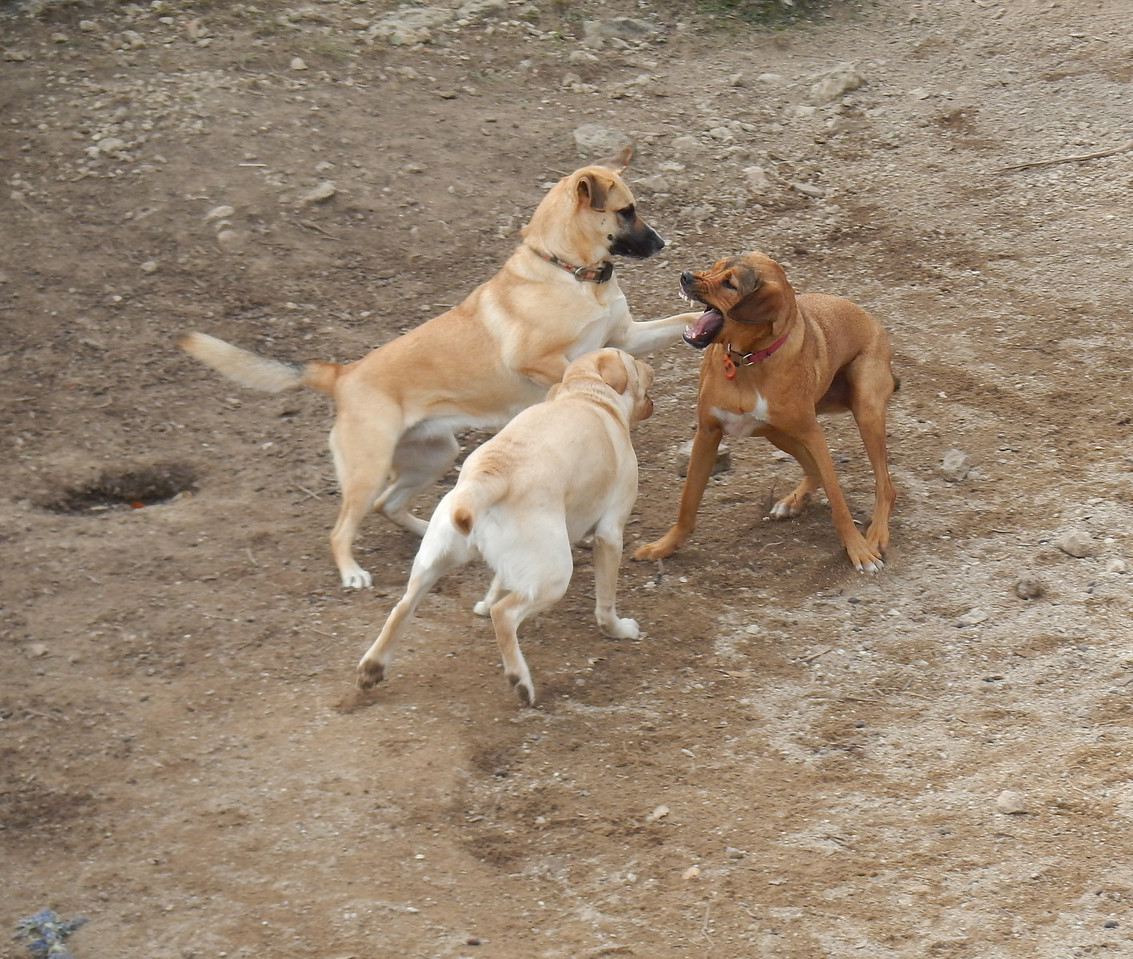 Briley, Cammy and Spartacus having a great time