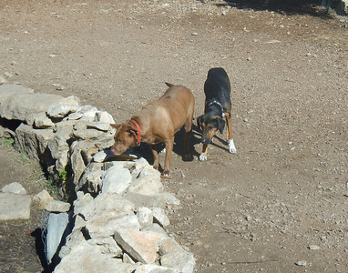 Charlei B and Cleo watching some pups play in the creek