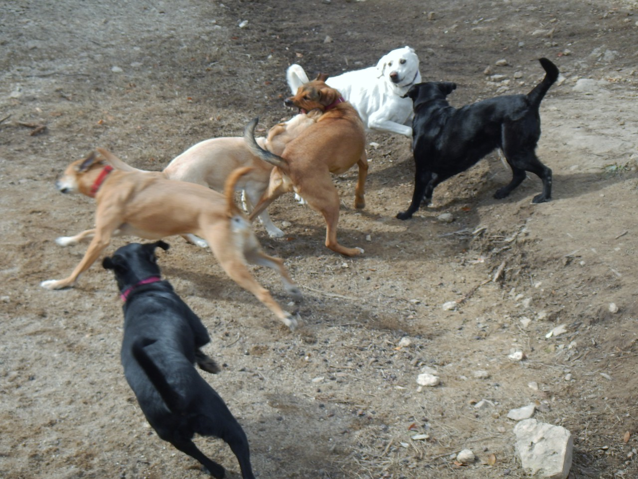 All this fun at the ranch_ Bella G, Sophie C, Cammy, Spartacus, Bonnie, Kali