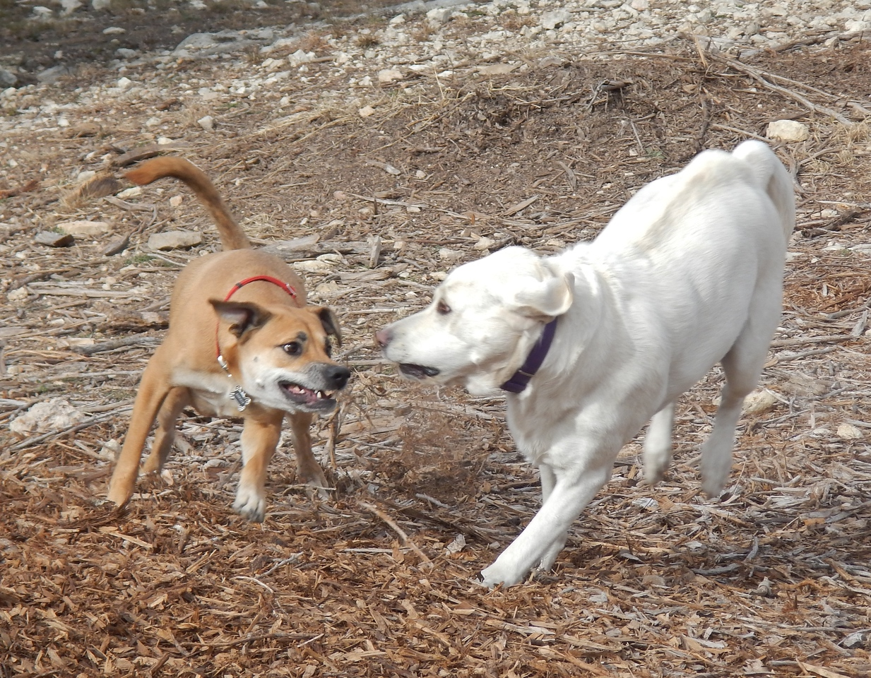 Sophie C and Bonnie getting their play on