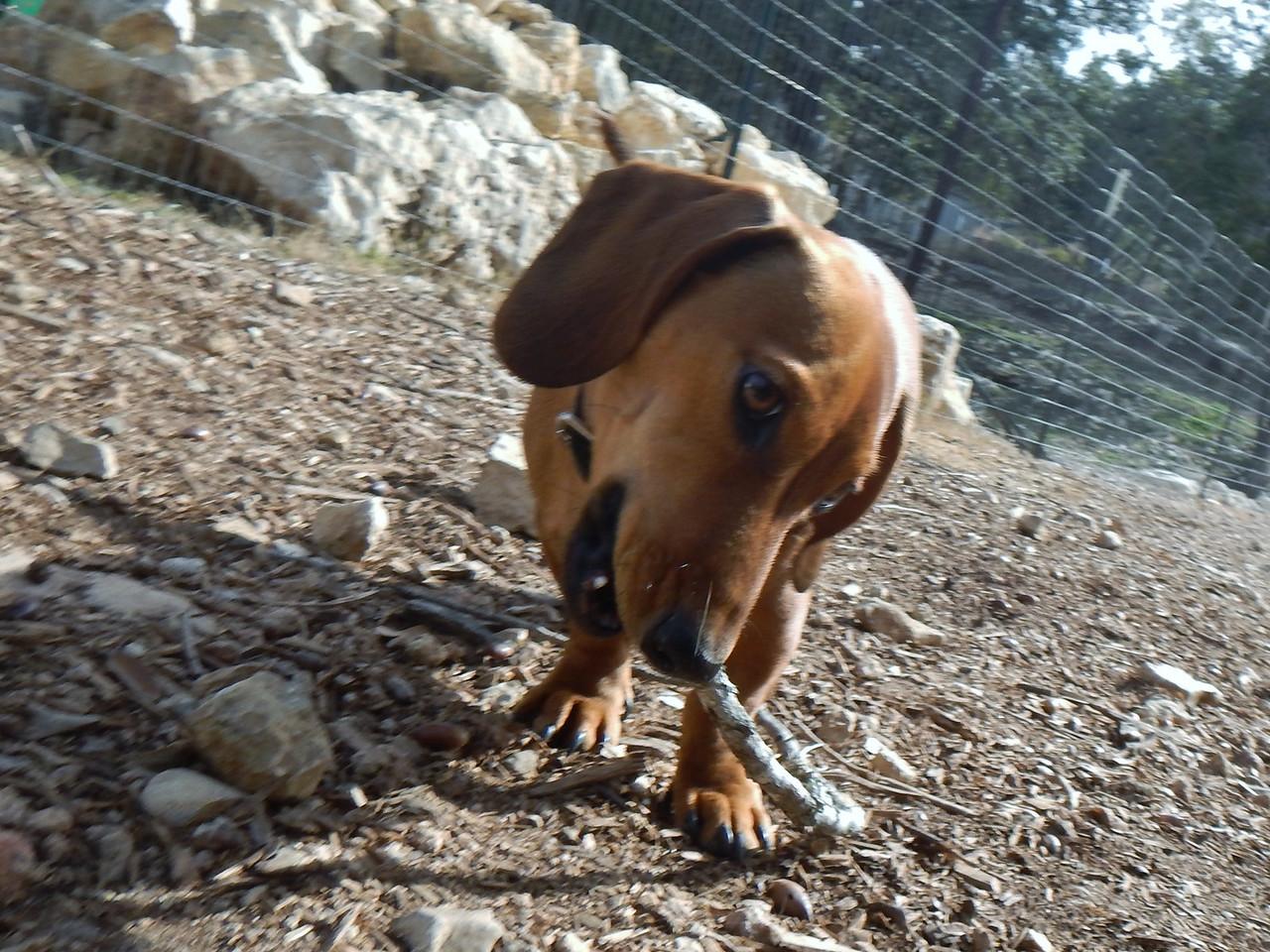 Sully found a stick
