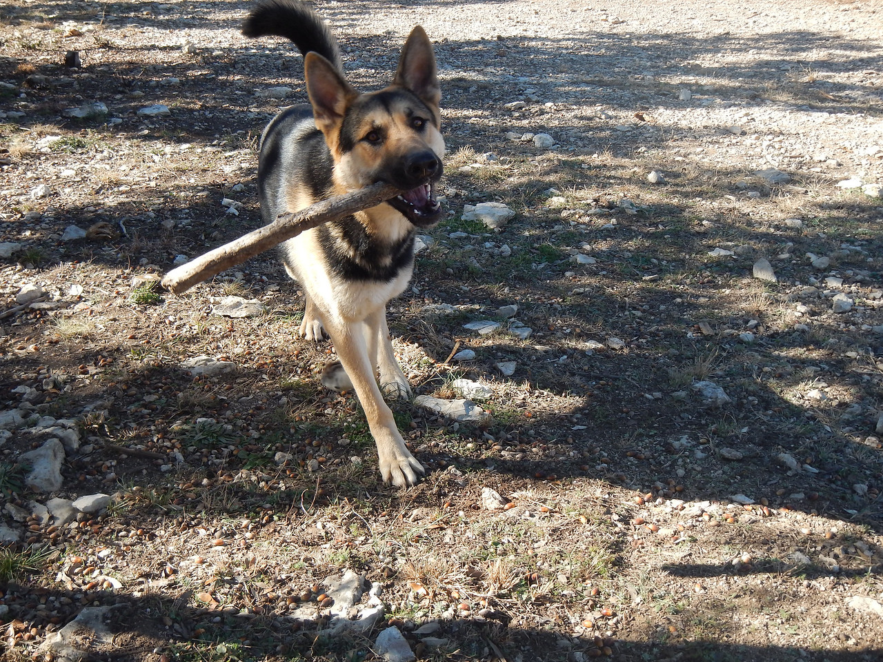 Bemtley found a stick!