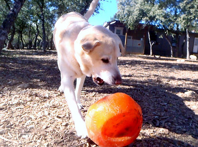 Bailey W  attacking the ball