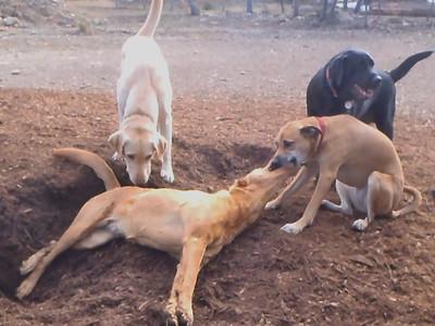 Lazy Tug-of-War_ Hermoine, Sophie C, Charlie Blackjack
