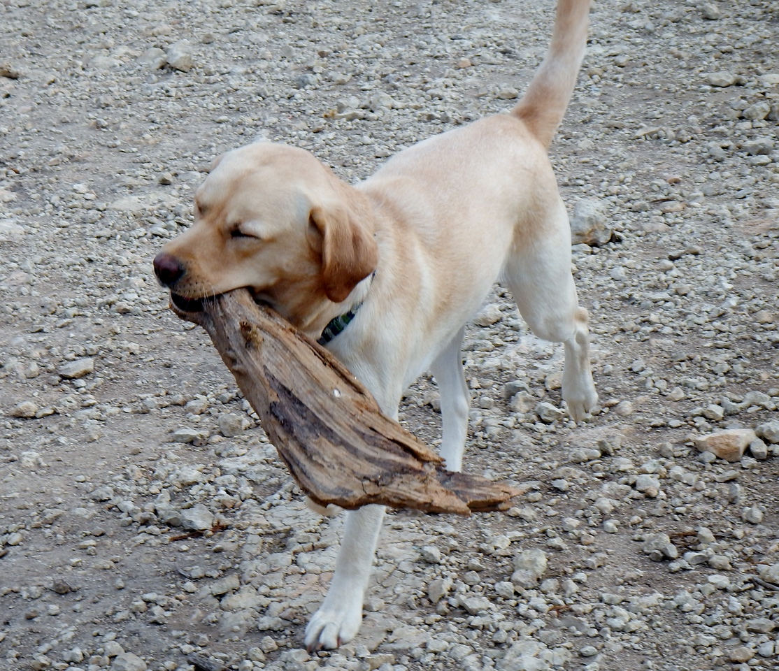 Miss Cammy carrying her stick