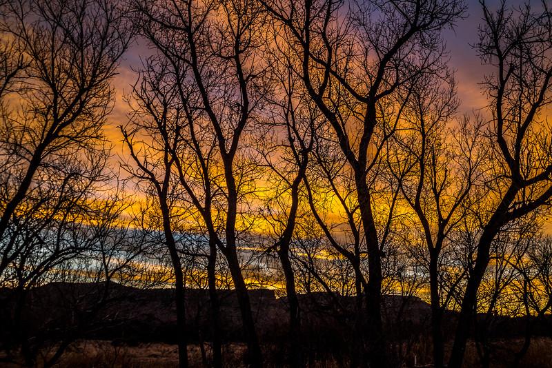 Bare Cottonwoods at Sunrise, Palo Duro Canyon