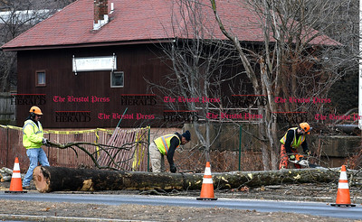1/12/2017 Mike Orazzi | Staff Bristol Public Works employees cut down a tree along Memorial Blvd. Thursday morning.