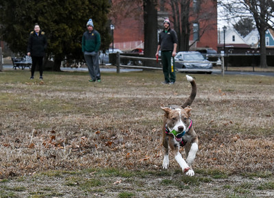 010216  Wesley Bunnell | Staff  Lady, a 6 month old shepard/lab mix, tracks the ball down during a game of catch on Federal Hill Green on Monday afternoon.  In the background from the left are Jessica Williard, Matthew Dutton and Mark Williard.