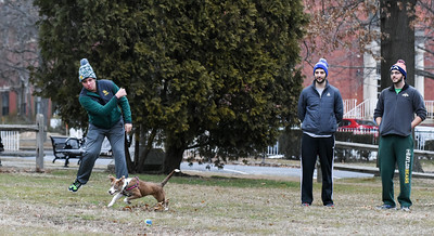 010216  Wesley Bunnell | Staff  Matthew Dutton, left, plays a game of catch six month old shepard/lab mix Lady on Federal Hill Green on Monday afternoon. Owner Paul Williard , shown center with Mark Williard.